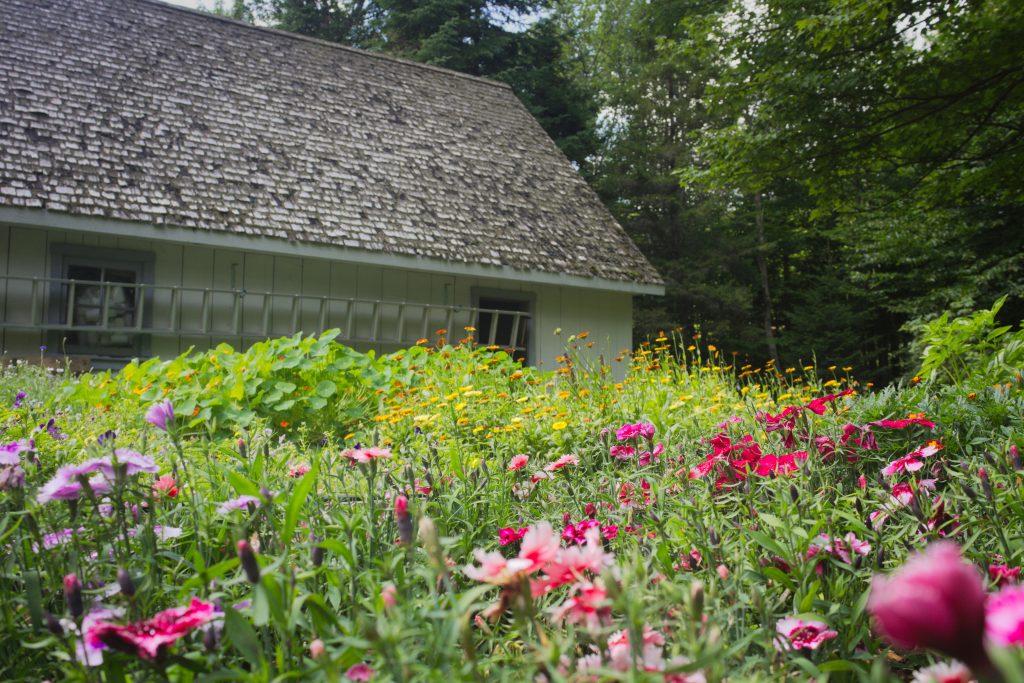 belle-a-croquer-jardin